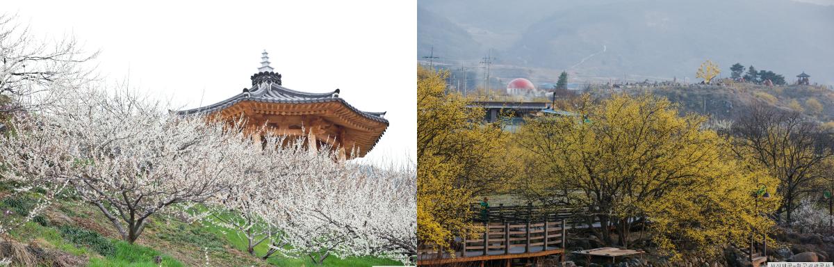 maehwa sansuyu collage2