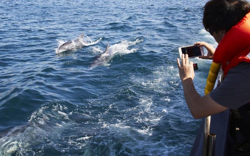 tourist taking photos dolphins jeju