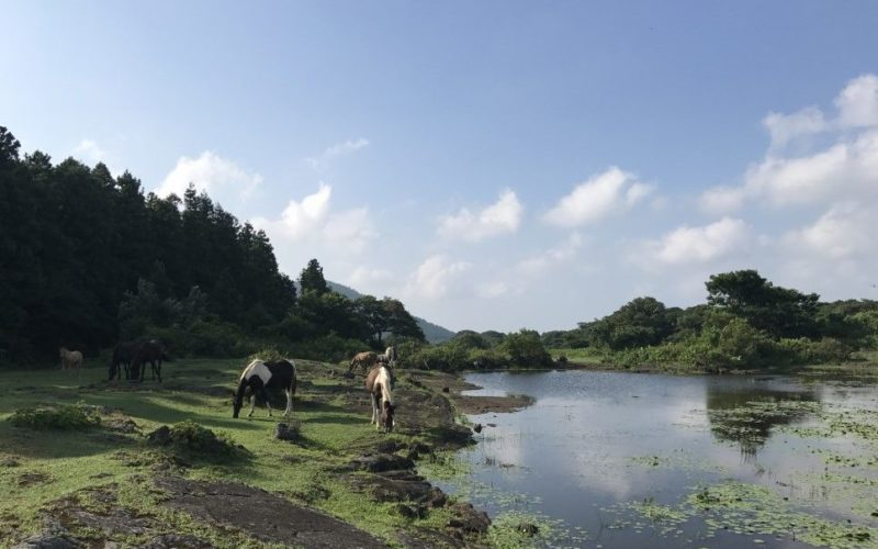 jeju offroad horse by pond