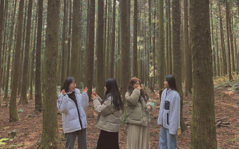 East Jeju Saryeoni Forest Path