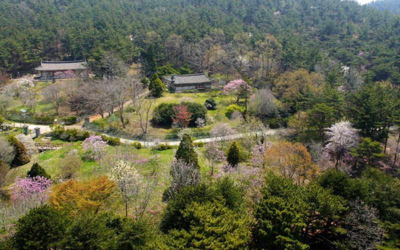 Cheollipo Arboretum panorama