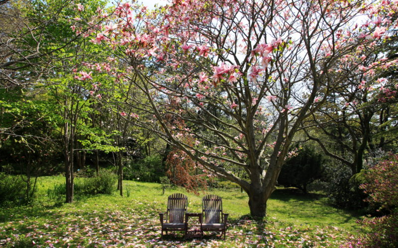 two chairs under magnolia at Cheollipo Arboretum