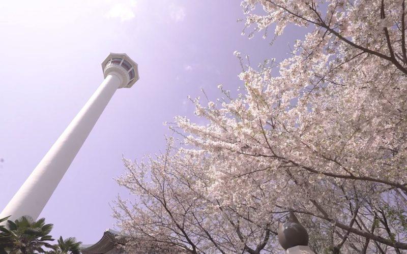 busan tower spring