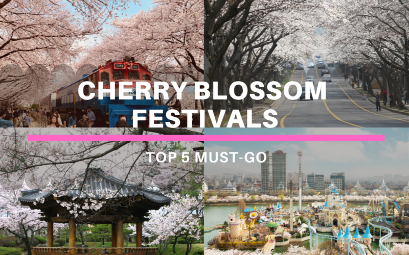 cherry blossom festivals cover with text