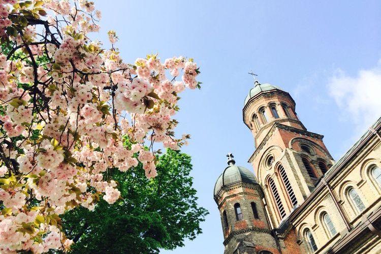 jeonju church cherry blossom