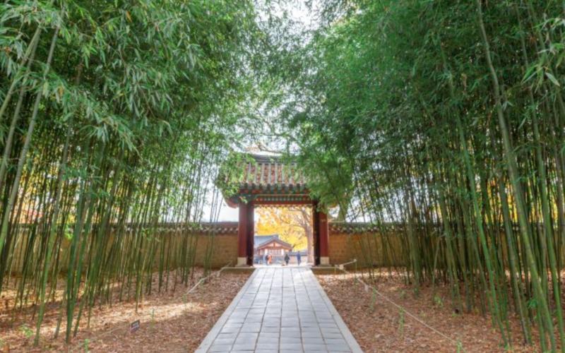 Jeonju hanok village bamboo