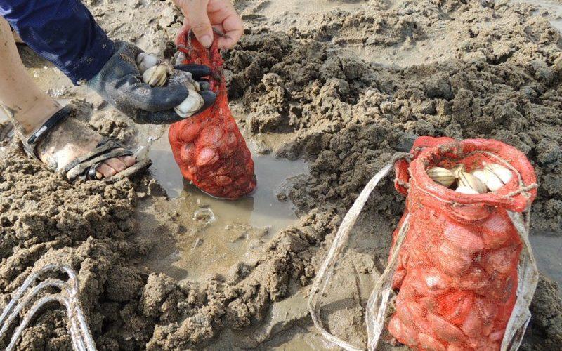 digging clam mudflat