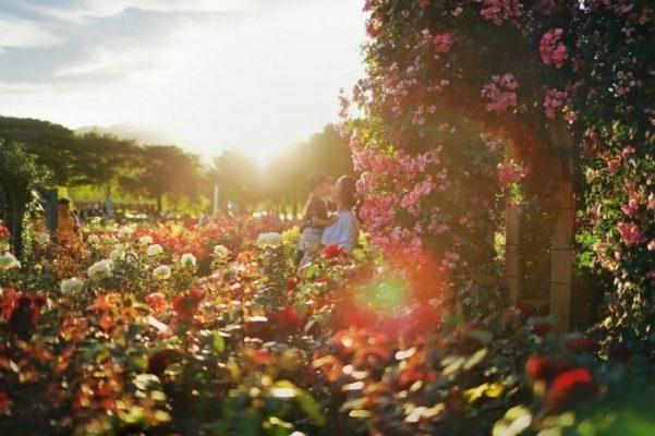 seoul rose festival3