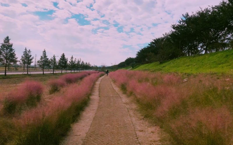 gyeongju pink muhly empty road
