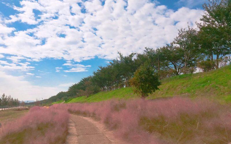 gyeongju pink muhly path sky