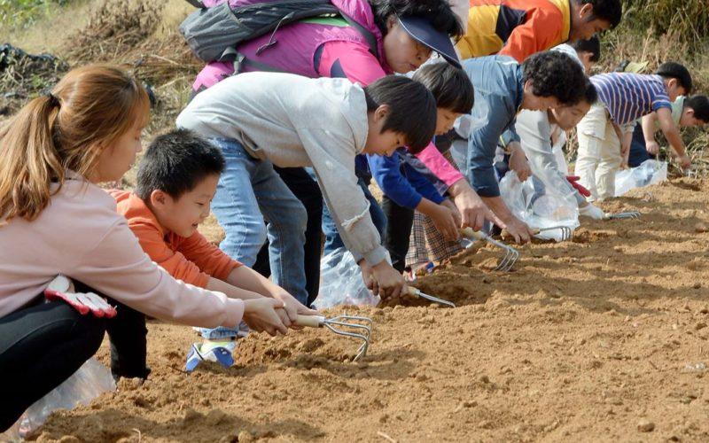 Ganghwa Ginseng Festival2