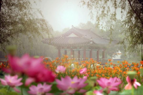 buyeo seodong lotus festival