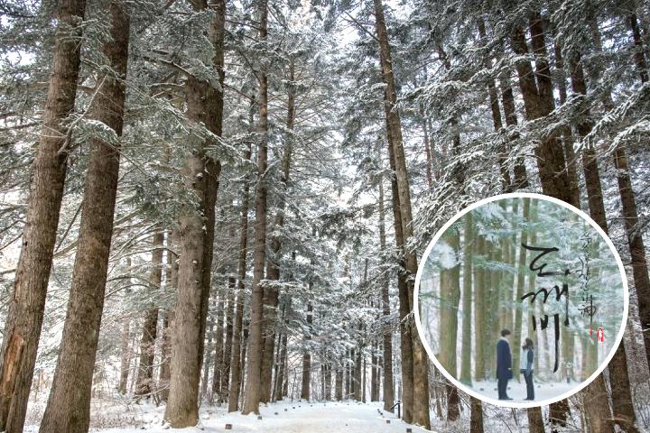 Woljeongsa forest