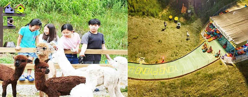 yongpyeong resort luge
